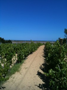 View through the vines to the Mediterranean Sea