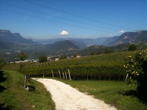 The view from Franz Haas vines