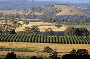 Barossa_Valley_02