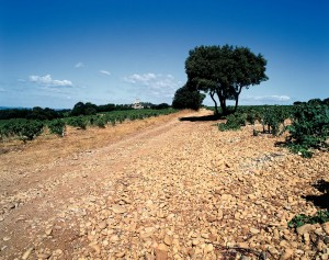 Chateauneuf du Papes-  blue sky & stones (credit Inter-Rhone)